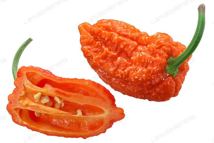 Orange naga pepper c. chinense, paths