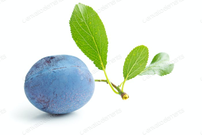 Fresh plum with branch with leaf.