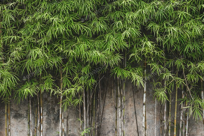 Green young bamboo background wall