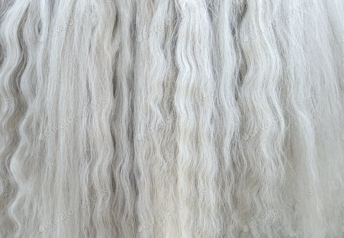 Long white mane of horse close up.
