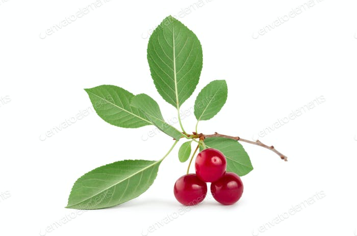 Three ripe cherries isolated