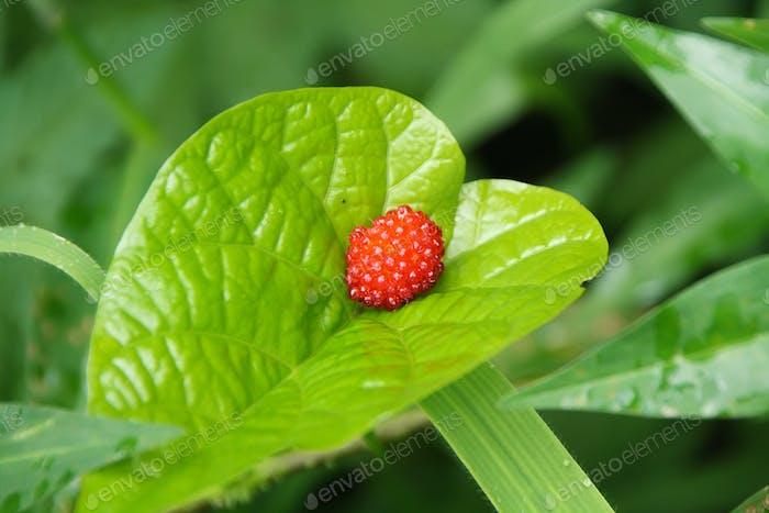 Raspberry above a green leaf