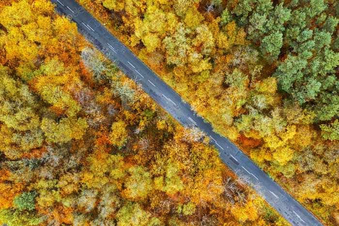 Aerial view of the road in the autumn forest