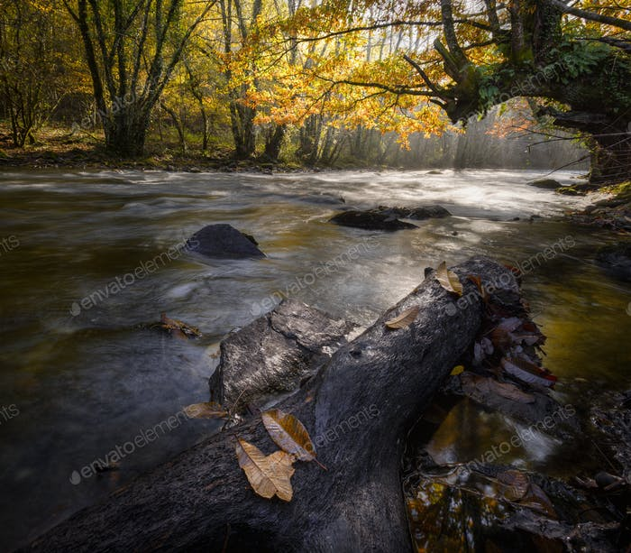 Autumnal light on a river