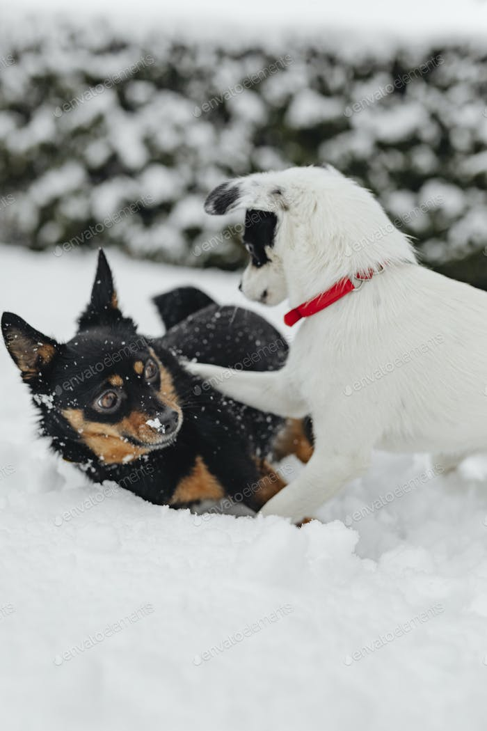 Dogs playing in a snowy park