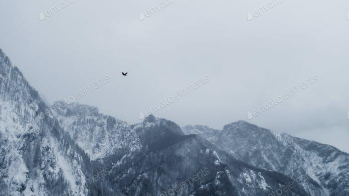alpine winter bird