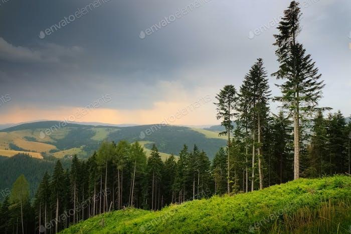 Tatra mountains landscape pine forest