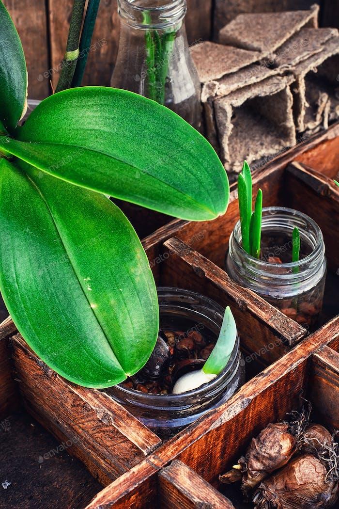 Sämlinge Frühlingspflanzen