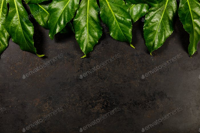 Tropical leaves on dark rustic background
