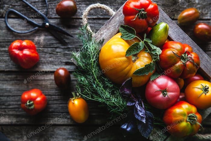 Fresh tomatoes in an old box. On wooden background. Wholesome healthy food