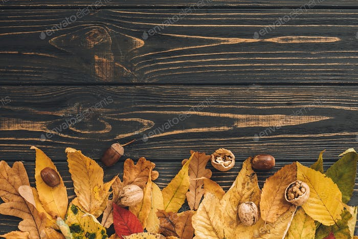 Bright colorful autumn leaves with acorns and nuts on rustic wooden background, flat lay