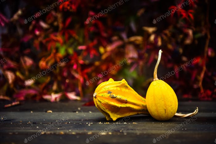Yellow pumpkin on a wooden table. Red ivy in the background. Thanksgiving concept