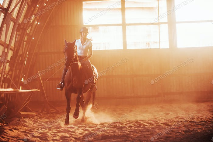 The girl jockey on the back of a stallion rides in a hangar on a farm