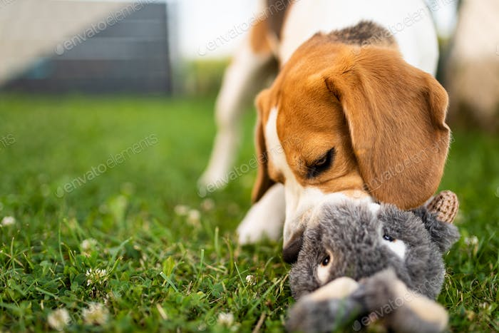 Dog with plush toy bunny rabbit in summer in garden