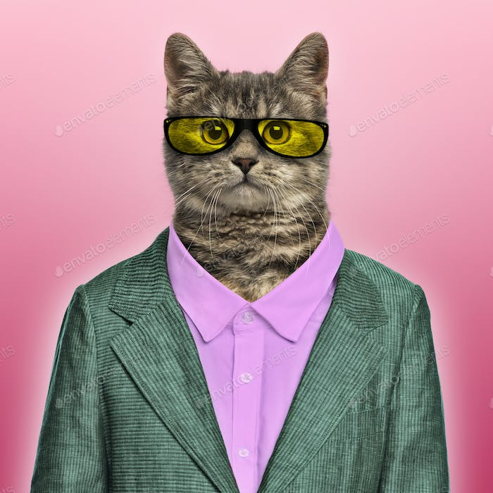 Stylish European Shorthair wearing a suit and sunglasses in front of a red backgound