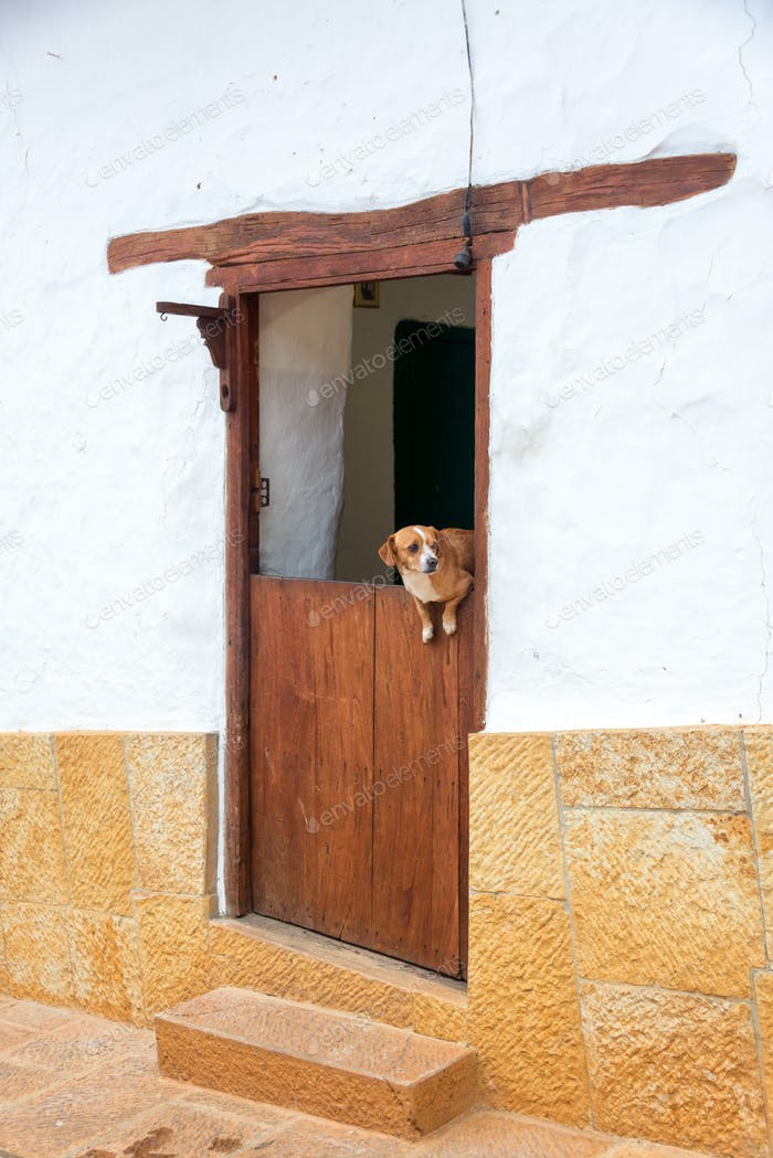 Dog in a Door