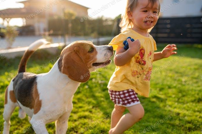 Niedliches Baby Mädchen von Beagle Hund im Garten im Sommer Tag gejagt.