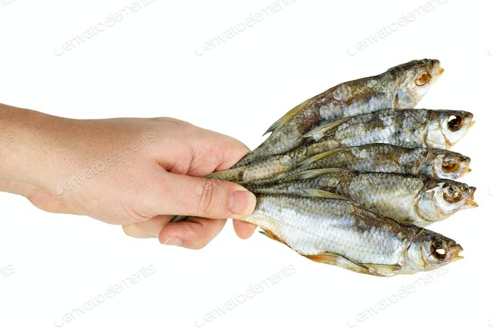 Hand hold few salted dried fishes