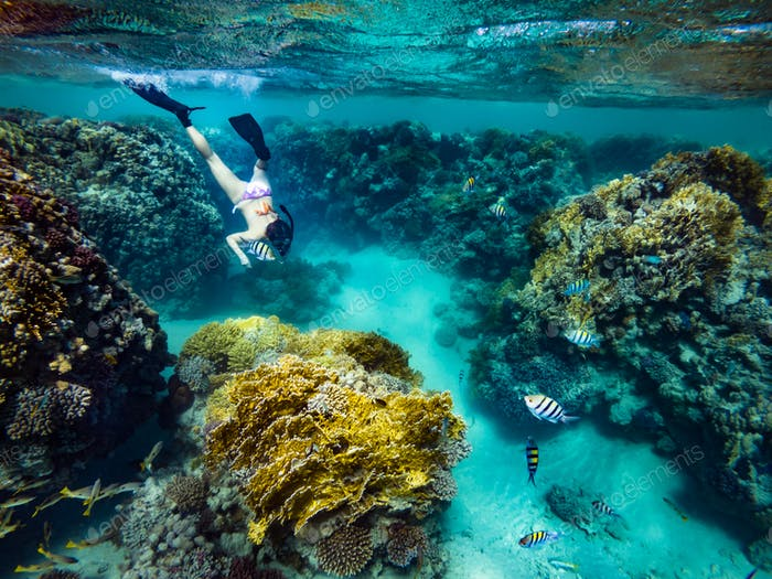 Tourist Snorkeling Turquoise Red Sea Egypt