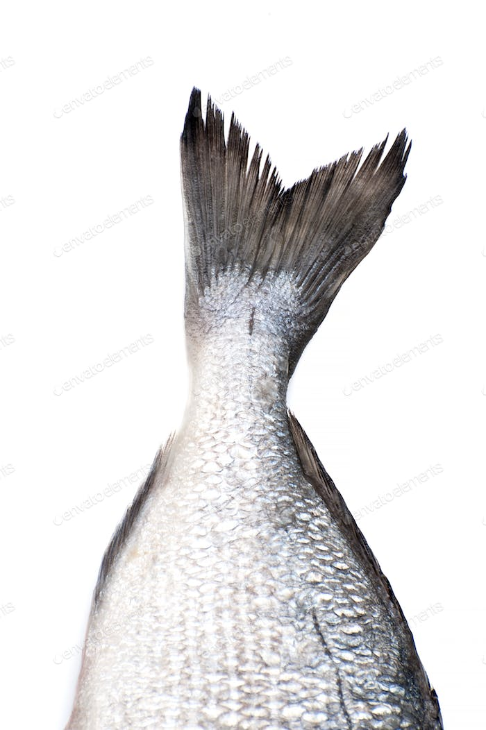 A raw fish tail close-up on a white background. Isolated.