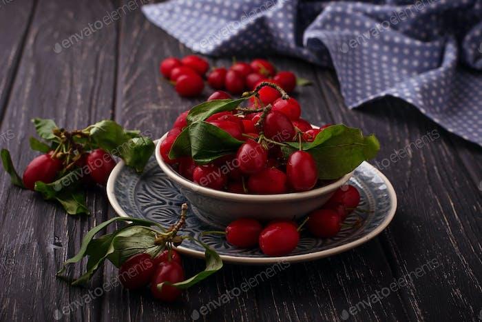 Cornel or dogwood berry