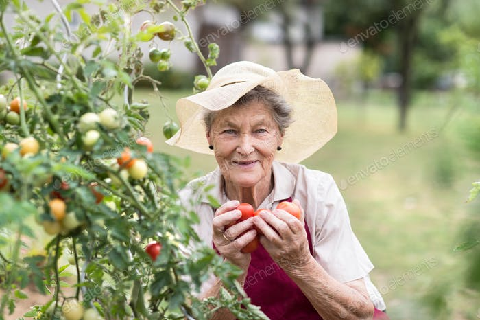 Senior woman in her garden holding tomatoes