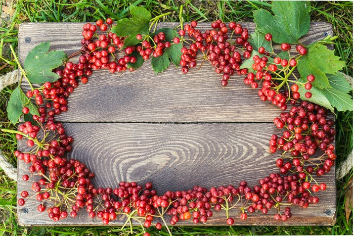 Thumbnail for Viburnum berries with bunches. Viburnum on wooden background