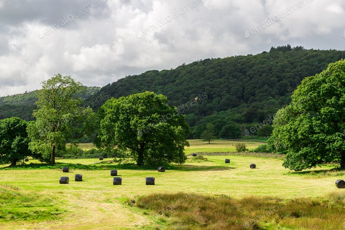 Picturesque Meadow View during Harvest Season in Lake District,