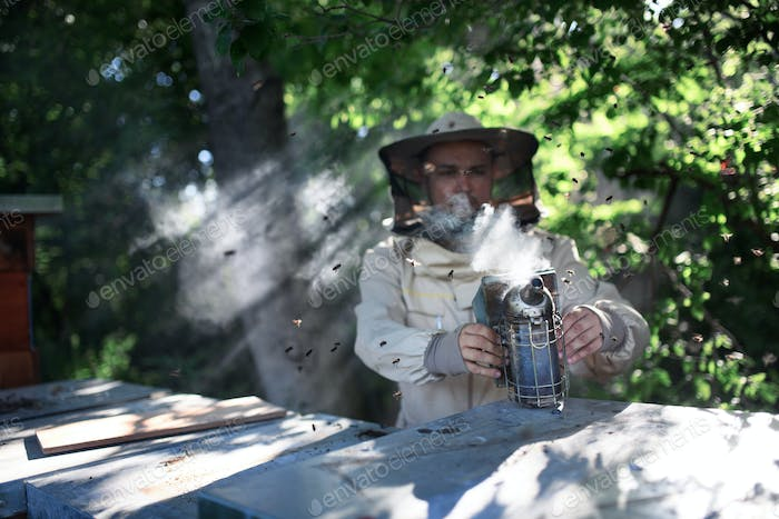 Portrait of man beekeeper working in apiary, holding bee smoker