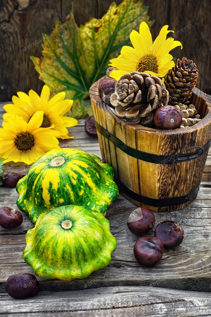 Autumn harvest squash with chestnuts and pine cones on wooden table