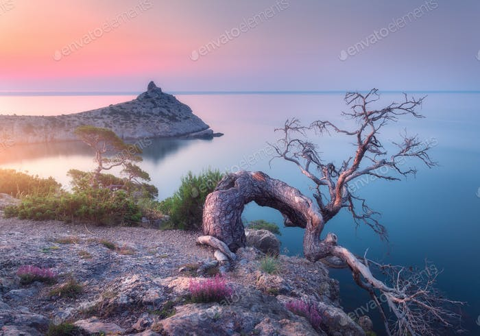 Amazing old tree growing out of the rock at sunrise. Landscape