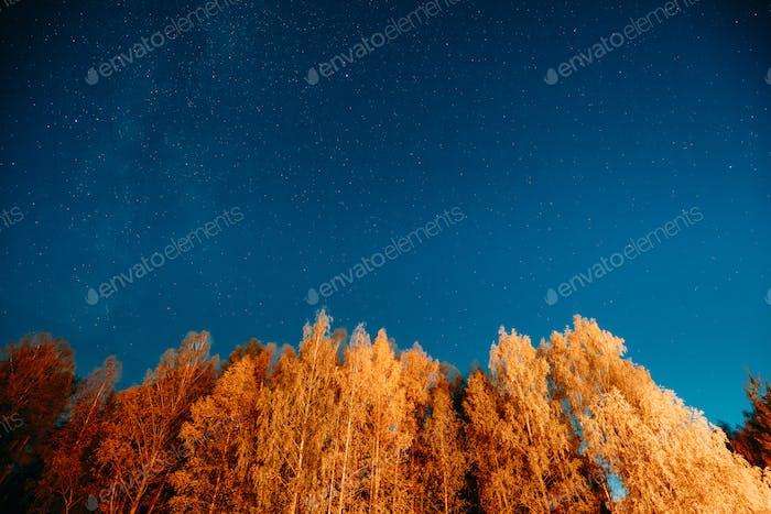 Nacht Sternenhimmel über Herbstbäume im Wald. Leuchtende Sterne über dem Wald