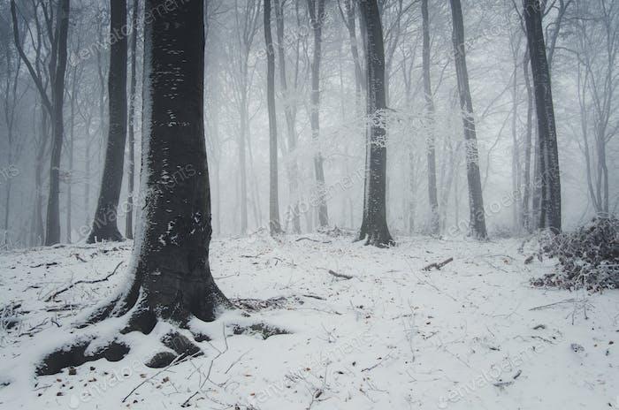 snow in winter forest fantasy landscape background