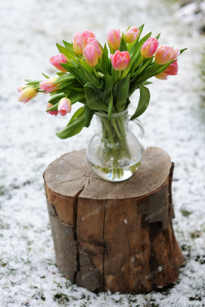 snow and tulips