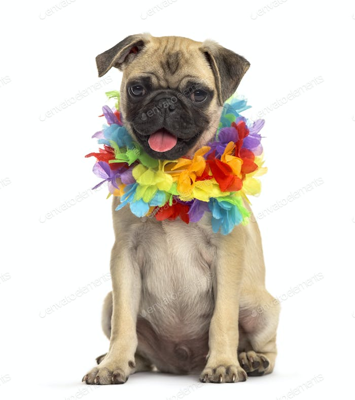 pug wearing a hawaiian lei, dog, isolated on white