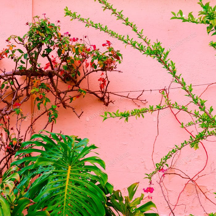 Plants on pink concept art.  Tropical green on pink wall backgro