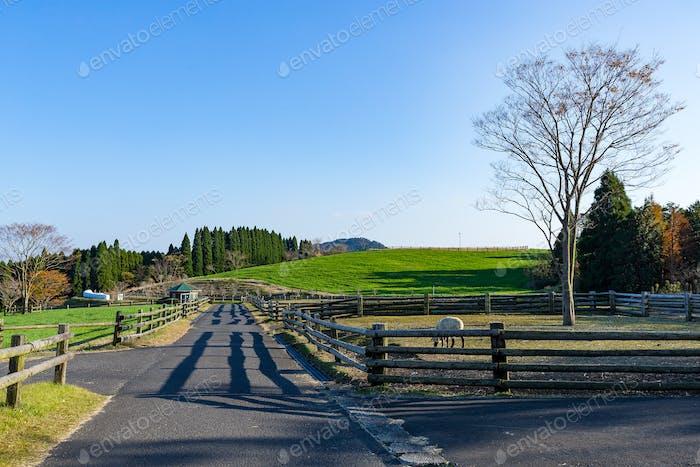 Beautiful pastures