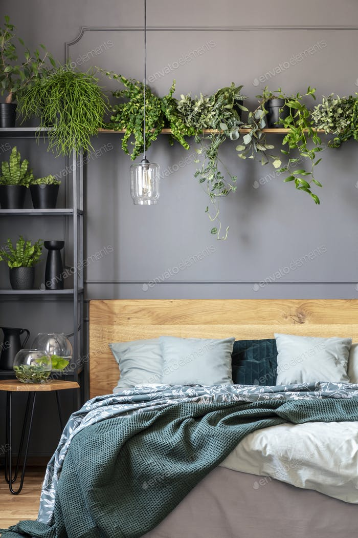 Plants above wooden bed with green blanket in grey bedroom inter