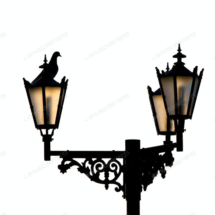 Lamps and assidenous pigeon.