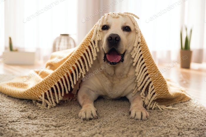 Lindo perro en Página de inicio