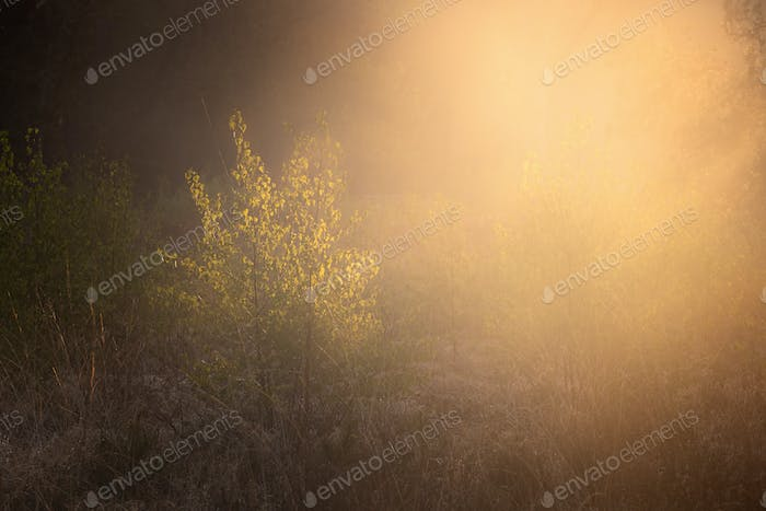 sunrise in misty forest