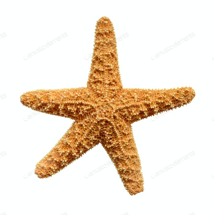 Isolated Starfish