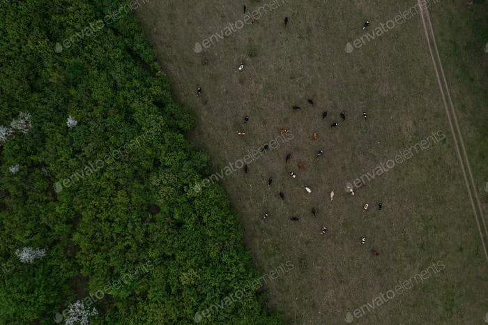 Top view of trees texture, land and cows