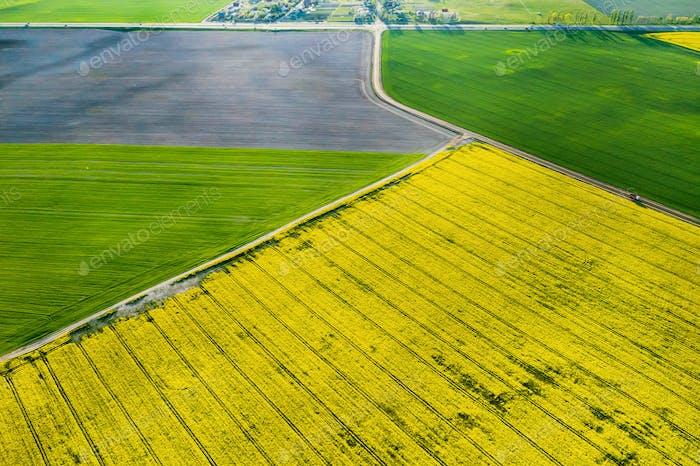Draufsicht auf das gelbe Rapsfeld und das Dorf. Ein gesätes Feld von Rapssamen in Belarus.