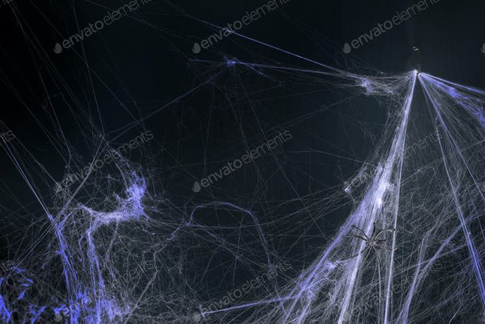 halloween, decoration and horror concept - decoration of artificial spider web over black background