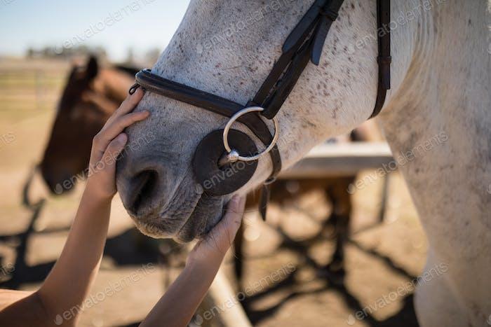 Hand streicheln weiße Pferde Mund