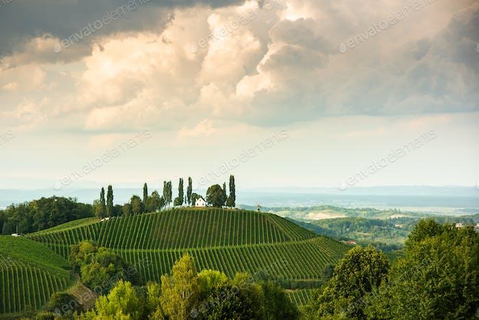 Vineyard on an Austrian countryside, Styrian Tuscany