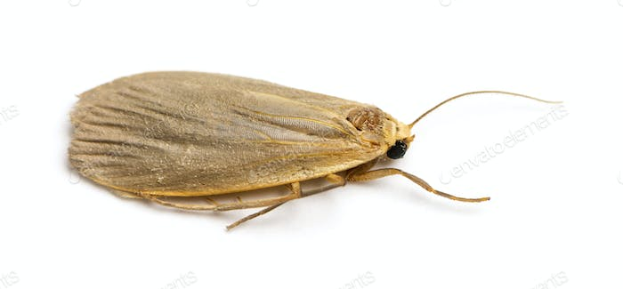 Dead insect, isolated on white