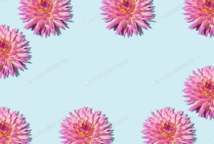 Floral pattern. Top view. Floral frame texture. Flat lay with pink dahlia flowers on pastel blue