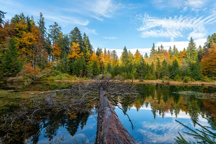 Thumbnail for Forest lake in autumn colorful foliage